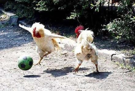 第一届公鸡杯足球赛