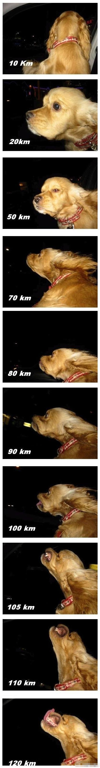 狗狗演绎不同时速的表情,真到位