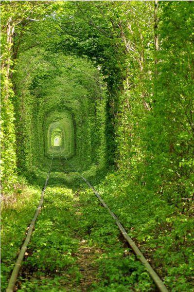 穿越绿色隧道