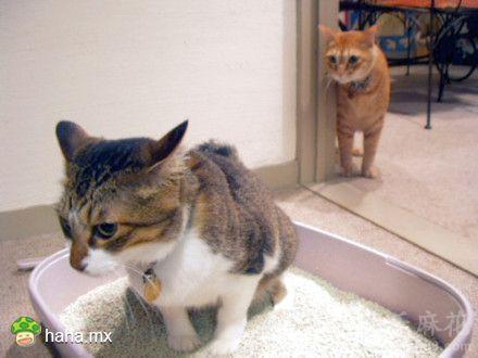 为什么每次铲猫屎时,猫猫都喜欢盯观跟,它们格外在乎自己的便便吗?