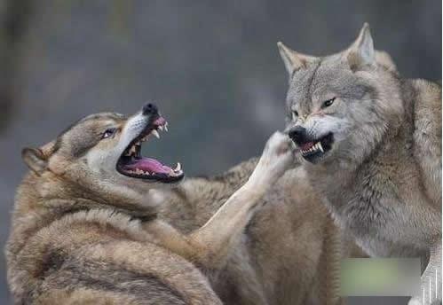 抓拍动物们的爆笑瞬间