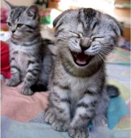当一个笑点很低的人在旁边,你就会像左边那只猫一样