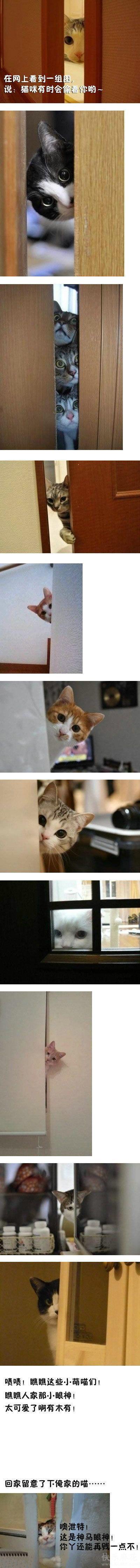 网上看到猫咪偷窥超可爱,回家留意了下俺的猫,结果...